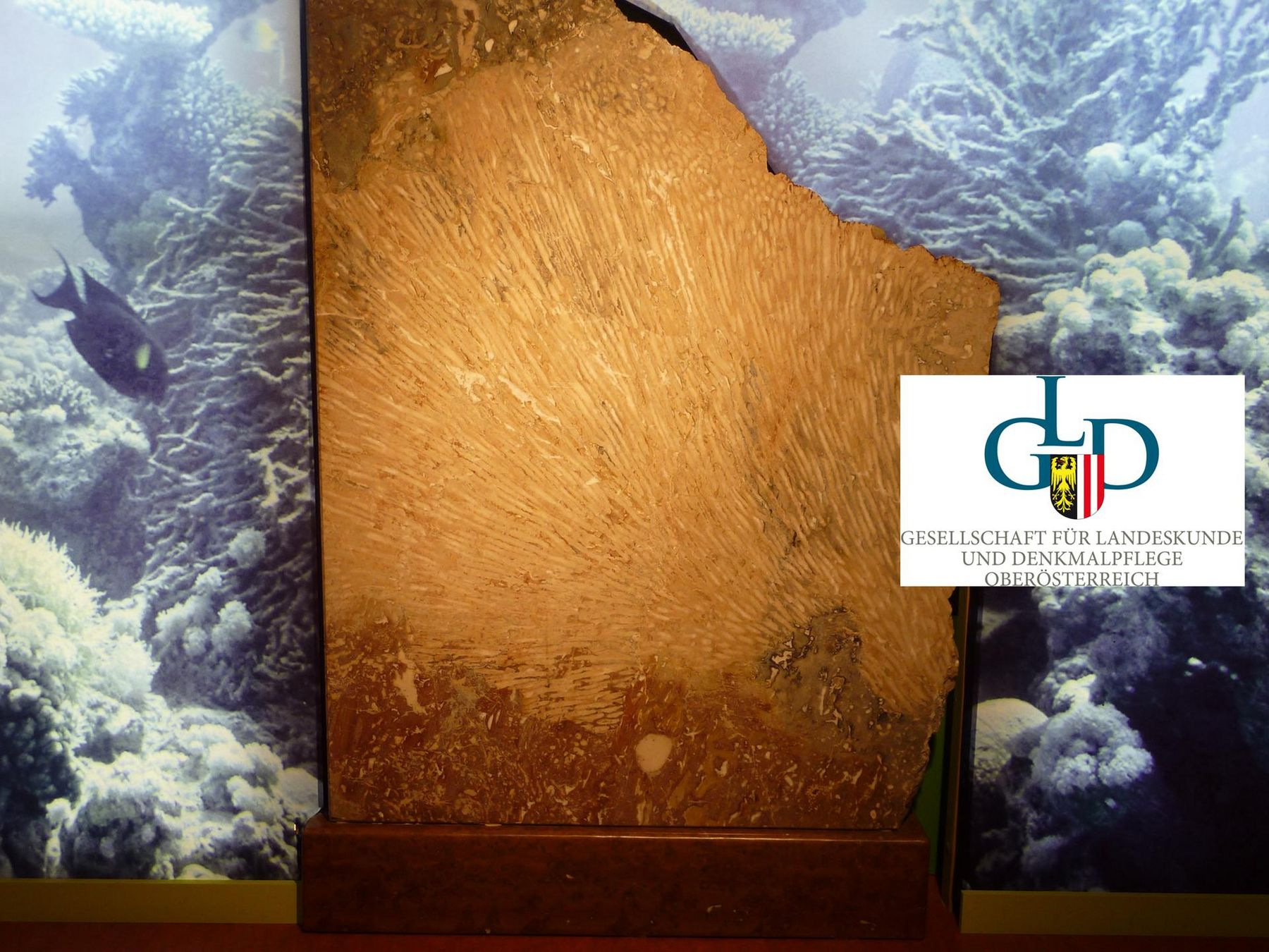 AR Korallenstock mitGDLLogo